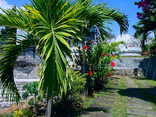Roystonea Plants (Palem Raja) in The Garden
