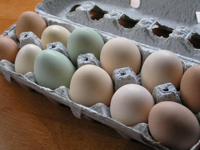 farm fresh eggs easter eggers