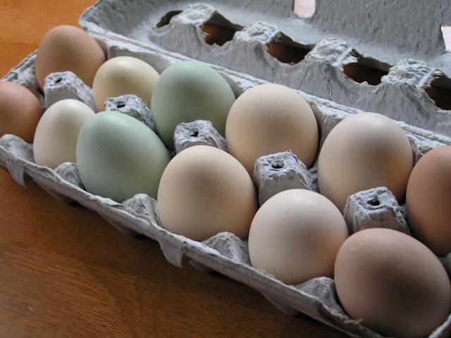 farm fresh eggs easter eggers