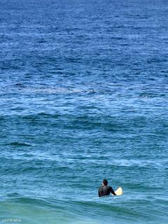 bobbing blue surf