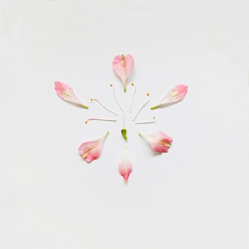 exploding flower art