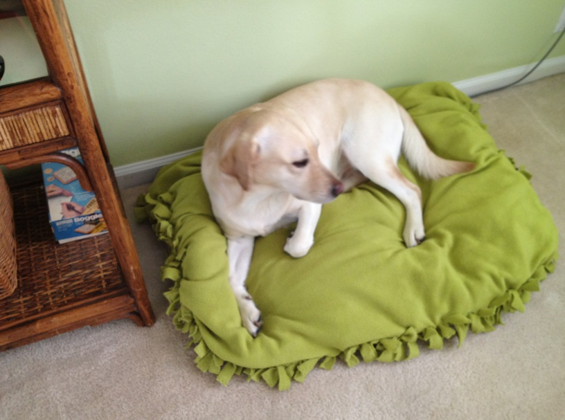 DIY NO SEW Doggy Bed or Floor Pillow | TiPs *N* GiGgLeS!