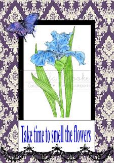 Blue Iris #3