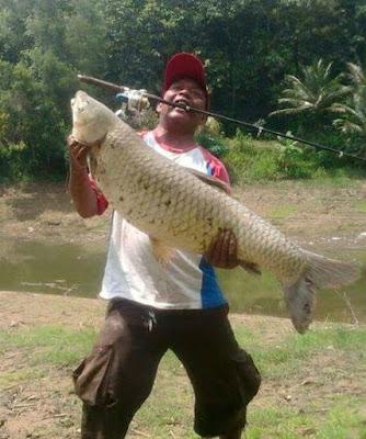 Tips dan Umpan Mancing Ikan Grass Carp(Braskap) di Rawa/Danau