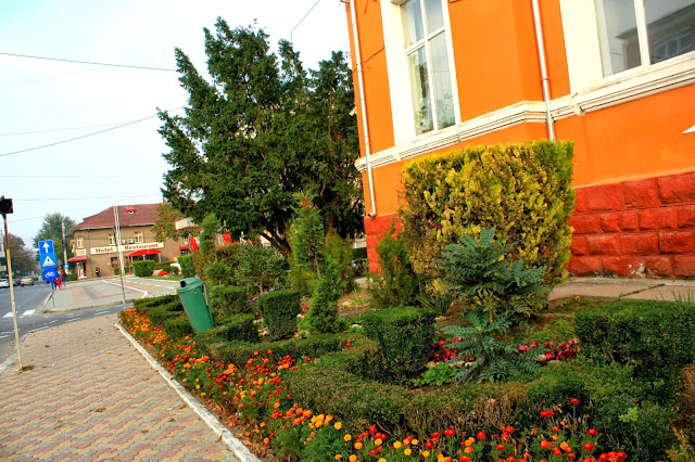 Flowers bed in front of the Medgidia Council