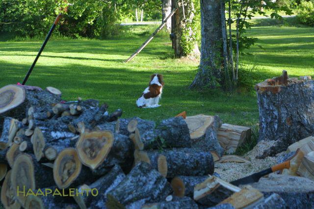 Milloin Oravan Poikaset Lähtevät Pesästä