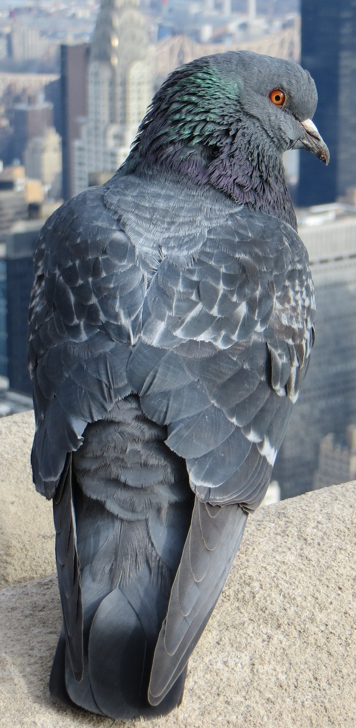 A pigeon on top of a skyscraper.