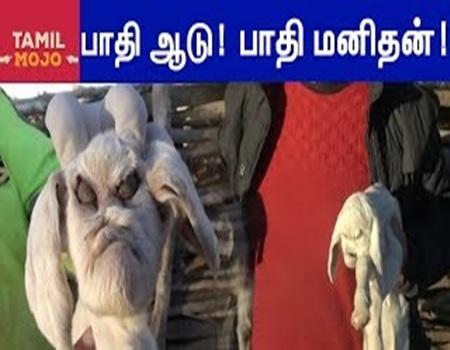 Paathi Aadu Paathi Manithan | TubeTamil