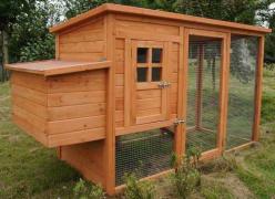 Panduan Membina Reban Ayam Di Belakang