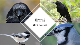 December 1 Program: Bird Brains