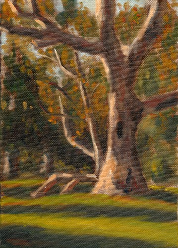 Oil painting of a River Red Gum with other Eucalypts in the background, and late afternoon shadows in the foreground.