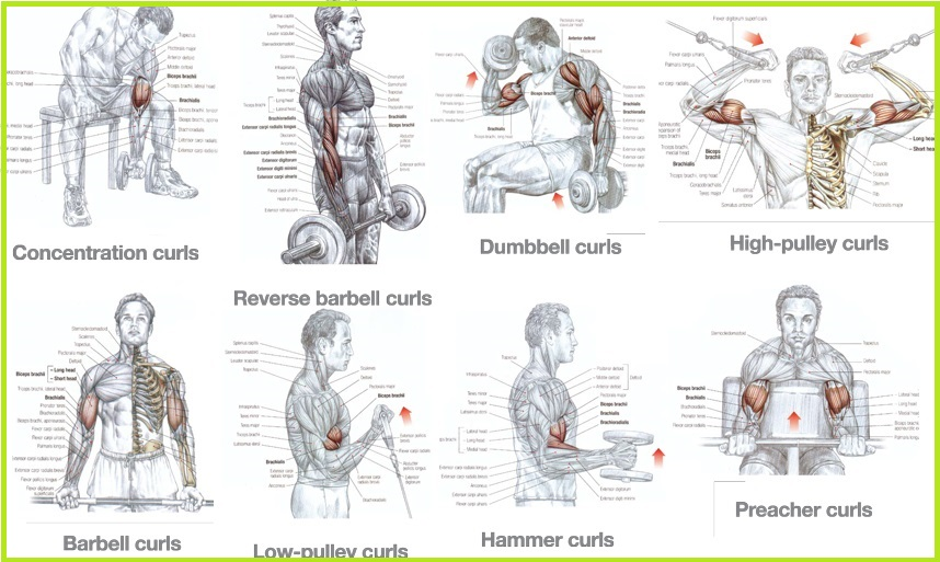 Best Bicep Workouts for Mass Building