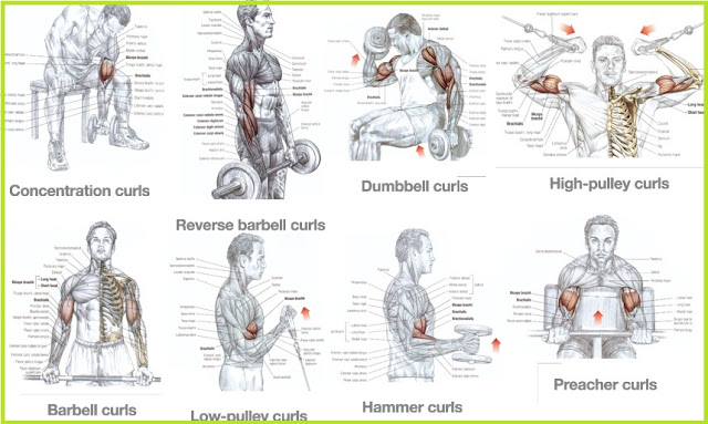 Forearm Muscle Building Workouts