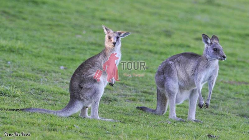 Tourist Queanbeyan Best Tourist Attractions