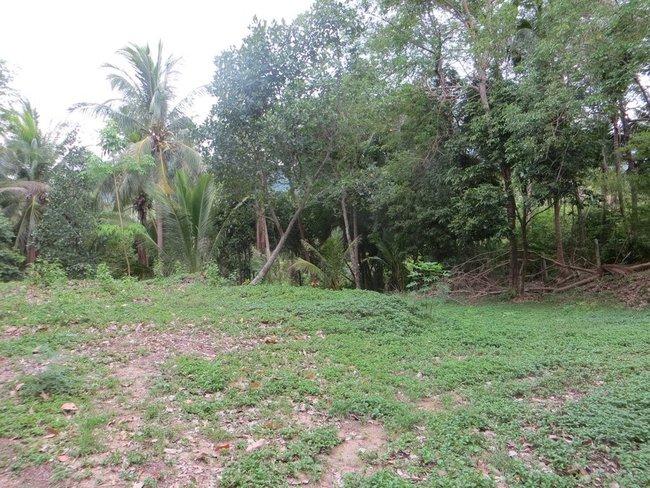 тайский лес