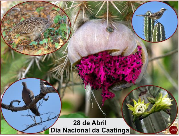 28 de Abril - Dia Nacional da Caatinga