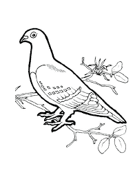 Printable TurtleDove Coloring Pages