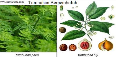 Pengertian, Jenis-jenis, dan Manfaat Tumbuhan Berpembuluh (Tracheophyta)