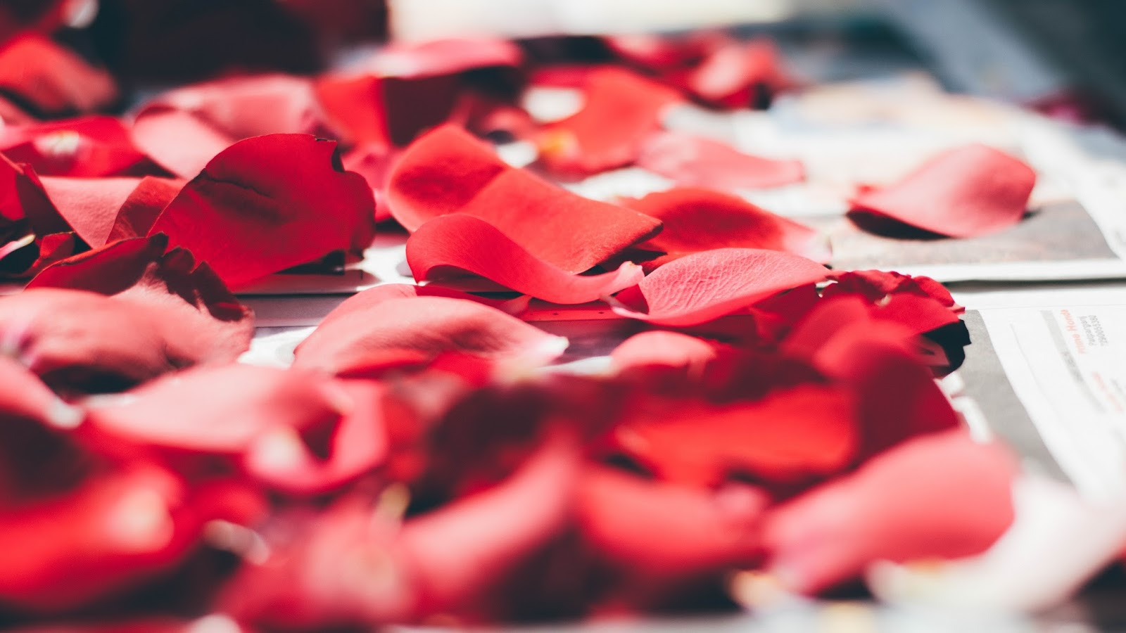Aus Liebe zum Duft, Parfums, Artistic Parfumes, Lifestyle, Beauty Blog, Beauty Stories, Duft, Niche Parfume, Pitti Fragranze, Parfumerie Möltgen, Lalique, Bulgari, Shalimar