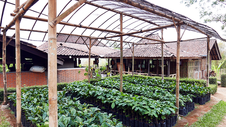 Euriental | fashion & luxury travel | 2 Days in Central Java, Mesa Stila coffee plantation tour