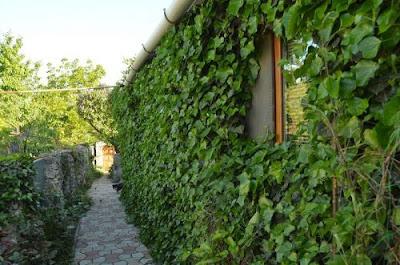 Озеленення стін