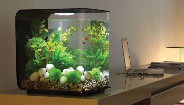 Model Aquarium Mini dengan Lampu LED - Budidaya Ikan