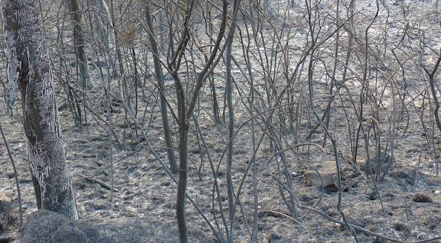 Las llamas han calcinado ya 8.800 hectáreas en los montes gallegos