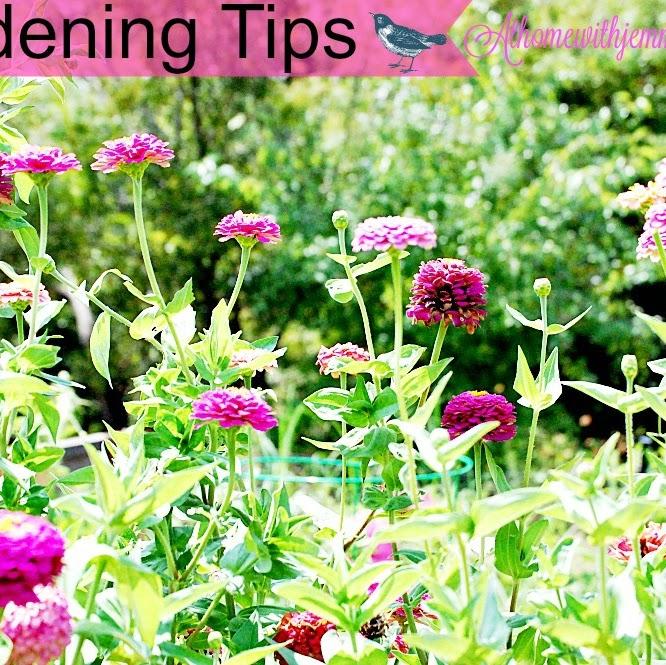 Gardening In The Fall