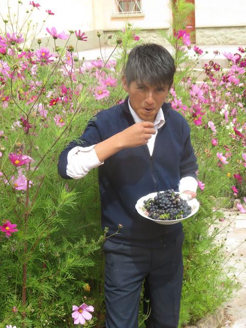 Traubenernte im einem der höchstgelegenen Weinberge unseres Planeten. Die Trauben sind hier auf 3500 m über dem Meer gewachsen