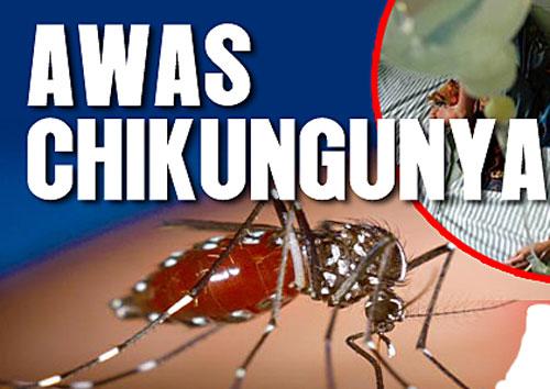 Hasil gambar untuk Demam Chikungunya
