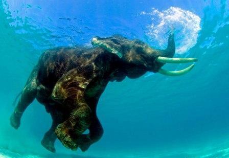 APK Edit foto tambah gajah terbang di langit biar gokil