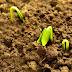 Brasil| Preços e custos preocupam sementeiros em MT