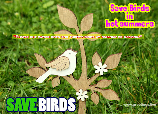 Save thirsty birds in hot summers picture message