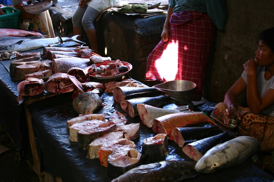 암뻬난 acc 시장의 생선들