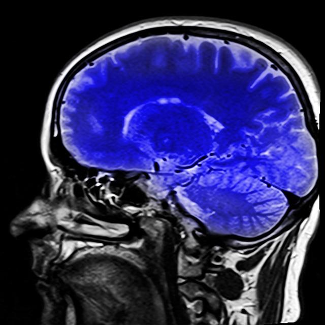 Les données actuelles appuient l'hypothèse égoïste du cerveau