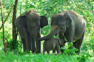 Obyek wisata Taman Nasional Way Kambas