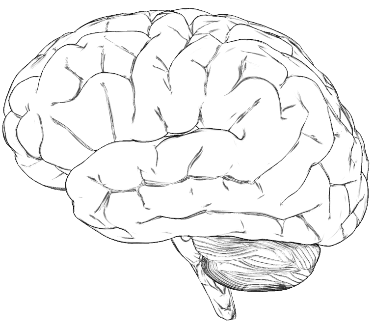 Amazing Little Science: Why brain surface has grooves and