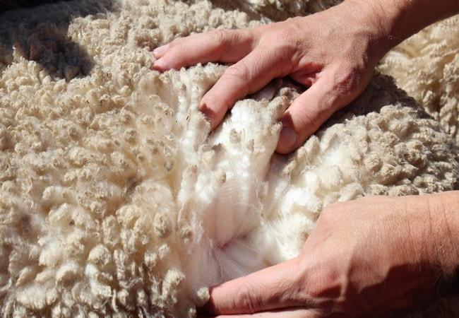 Animal fiber
