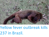 http://sciencythoughts.blogspot.com/2018/03/yellow-fever-outbreak-kills-237-in.html