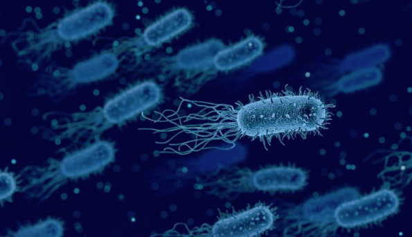 Solar panels that use bacteria to generate electricity