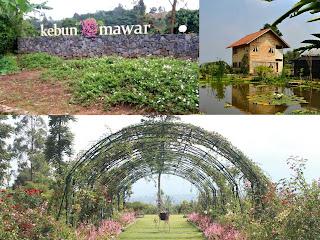 Kebun Mawar Situhapa Tempat Wisata Yang Sedang Jadi Favorit Di Garut