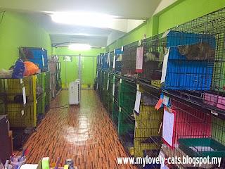 cat room 4