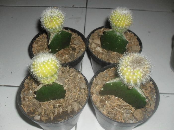 taman mini kaktus check out taman mini kaktus cntravel. Black Bedroom Furniture Sets. Home Design Ideas