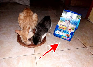Makanan kucing wet cat food friskies