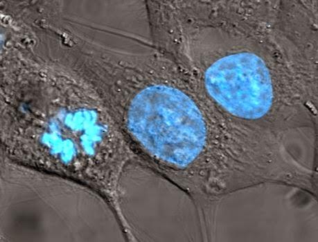 Nucleo celular y biologia