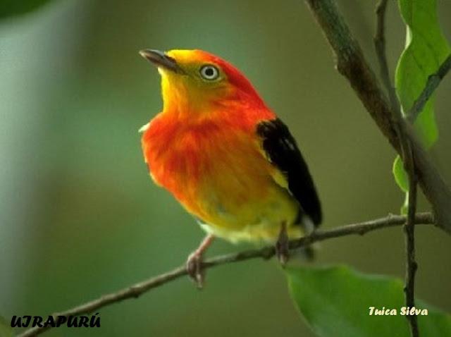 Resultado de imagem para imagens de lindos passarinhos