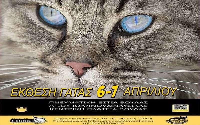 Διεθνής Έκθεση Μορφολογίας Γάτας 2019