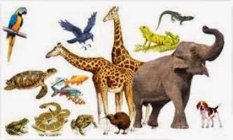 http://www.materi-sma.com/2014/06/penjelasan-ciri-dan-klasifikasi-vertebrata.html