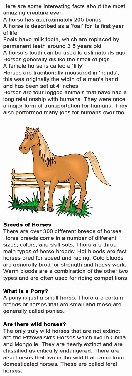 Horse Fun Facts For Kids Childhood Education