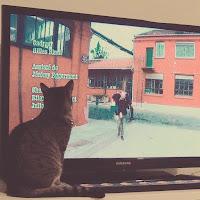Mogu aime regarder la télé